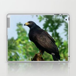 The Common Black Hawk Laptop & iPad Skin