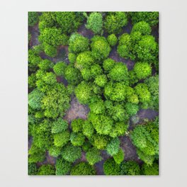 The Evergreen Expanses of East Texas Canvas Print