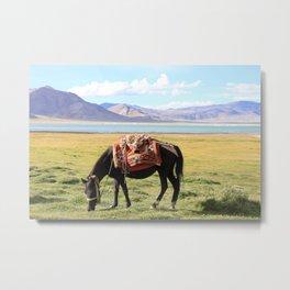 Tso Kar Horse Metal Print