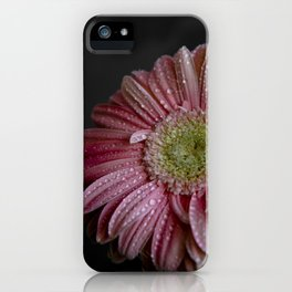 Gerbera spring iPhone Case