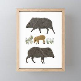 Javelina Family Portrait Framed Mini Art Print
