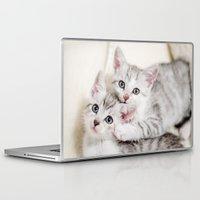 kitten Laptop & iPad Skins featuring Kitten by Sushibird