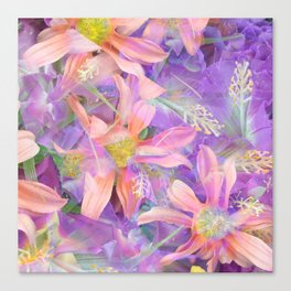blooming pink daisy flower with purple flower background Canvas Print