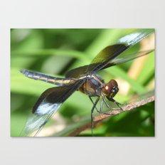summer dragonfly VII Canvas Print