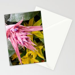 Aechmea pink blossom of the Bromeliaceae family Stationery Cards