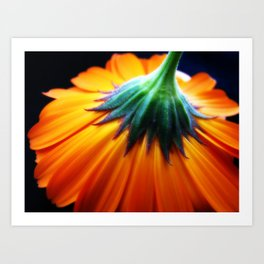 Tristan's daisy Art Print