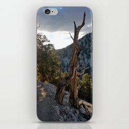 Ancient Bristlecone Pine Forest #2 iPhone Skin