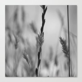 Weat Black And White Canvas Print