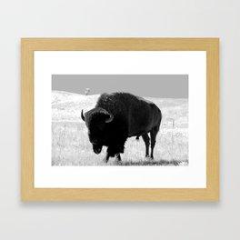 Bison On Open Range Framed Art Print