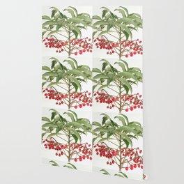 Spice Berry  Wallpaper