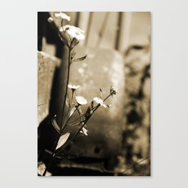 The Flower and The Wheel Canvas Print