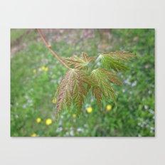 little leaf 10 Canvas Print