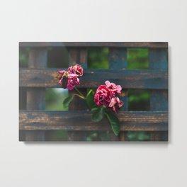 Ojai Roses Metal Print