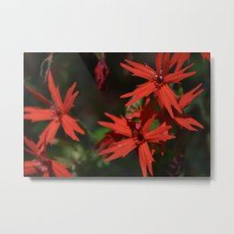 A Patch of Fire Pinks in the Smoky Mountains Metal Print