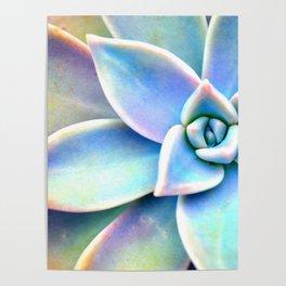 Bright Succulent Poster