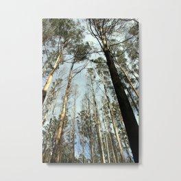 Tall Timbers Metal Print