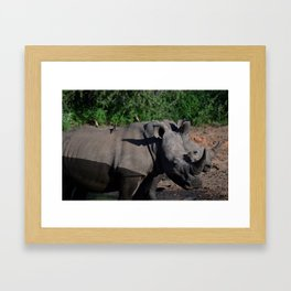 Breakfast on a rhino Framed Art Print