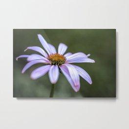 Summer Echinacea flower Metal Print
