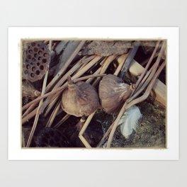 Still Life in Nature Art Print