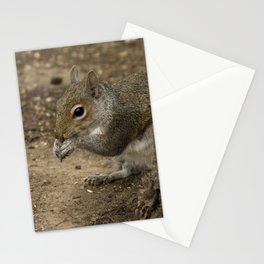 Woodland grey squirrel Stationery Cards