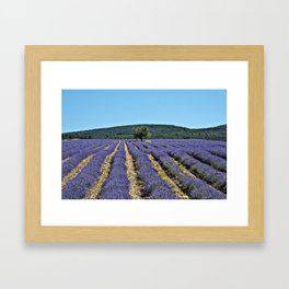 Lavender field, Provence, France Framed Art Print