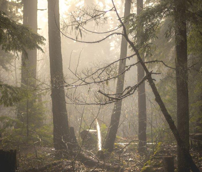 Sunrise Forest Adventure Metal Travel Mug