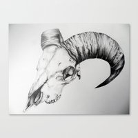 animal skull Canvas Prints featuring Animal Skull by Kelly Kennell
