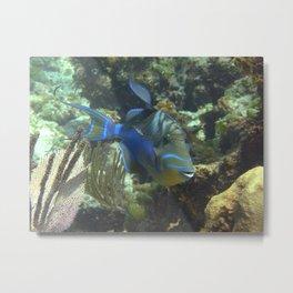 Tribal Triggerfish Metal Print