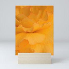 Delicate Yellow and Pink Edge Petals Mini Art Print
