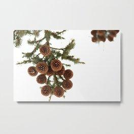 (Spruce or Fir) Cones Metal Print