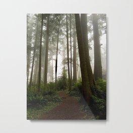 Foggy Forest Trail Cape Meares, Oregon Metal Print