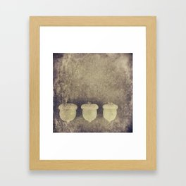 ACORN TRIO Framed Art Print