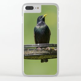 Starling on feeder 2 Clear iPhone Case