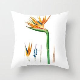 Bird of Paradise Flower, Strelitzia reginae, Strelitzia de la reine, Crane Flower, Plate 78, Pierre Joseph Redoute Throw Pillow