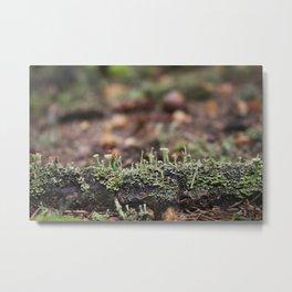 Lichen Forest Metal Print