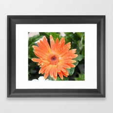 Happy Orange Daisy Framed Art Print