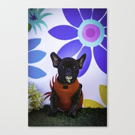 Black French Bulldog Wearing a Red Sweater Sits in front of a Spring Floral Background Canvas Print
