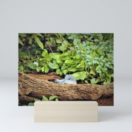 Nestling Shearwater Chick in Kauai by Reay of Light Mini Art Print