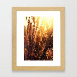 The sunset is golden Framed Art Print