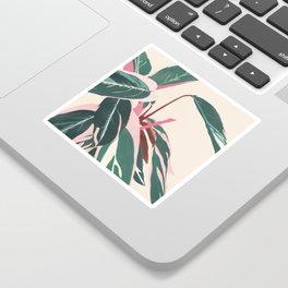 Stromanthe Sanquinea Sticker