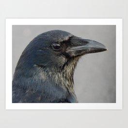 Crow beauty Art Print