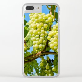 Delicious growing green grapes bunch farming on a beautiful blue summer sky background Clear iPhone Case