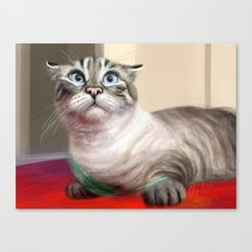 Cat Surprised Funny Animals with Feather Siamese Lynx-Point Canvas Print