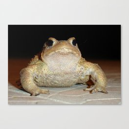 Common European Toad Canvas Print