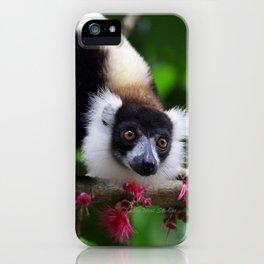 Black and White Ruffed Lemur, Madagascar iPhone Case