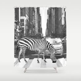 Black and White Zebra in NYC Shower Curtain