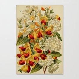 Beautiful flowering trees and shrubs for British and Irish gardens 1903 #24 Canvas Print