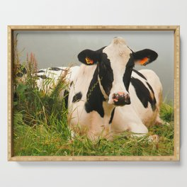 Holstein cow facing camera Serving Tray