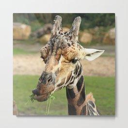 Sweet Giraffe Metal Print
