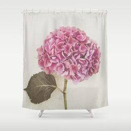 Beautiful Pink Hydrangea Shower Curtain